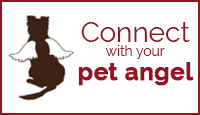 Connect with Your Pet Angel